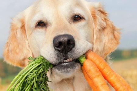 dieta leve para cachorro